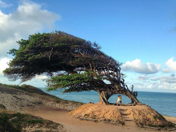 Litoral Norte Potiguar - Árvore do amor