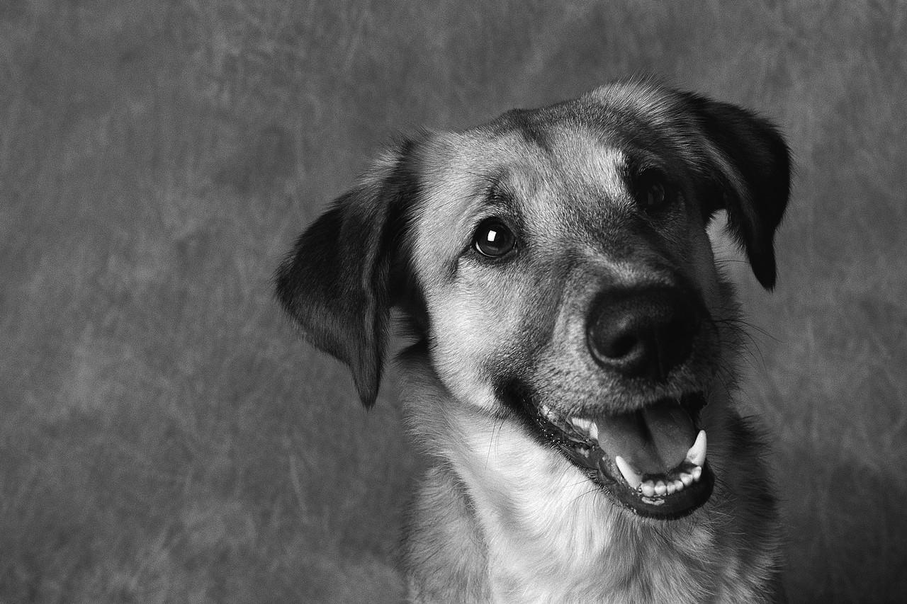 voc234 pode participar de uma feira de ado231227o animal neste